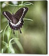 Black And White Butterfly V3 Canvas Print
