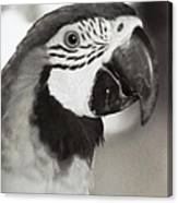 Black And White Parrot Beauty Canvas Print