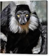 Black And White Ruffed Lemur Canvas Print