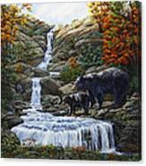 Black Bear Falls Canvas Print