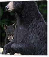 Black Bear With Cub Canvas Print