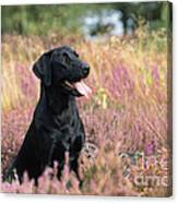 Black Labrador Dog Canvas Print