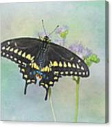 Black Swallowtail Canvas Print