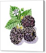 Artz Vitamins Series The Blackberries Canvas Print