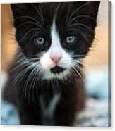 Black And White Kitten Canvas Print