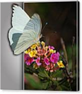 Blank Greeting Card 3 Canvas Print