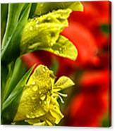 Blossom With Raindrops Canvas Print