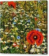 Blossoming Meadow Canvas Print