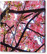 Blossoms And Bark Canvas Print
