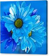 Blue Daisies In Vase Outdoors Canvas Print