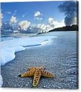 Blue Foam Starfish Canvas Print