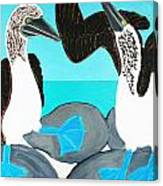 Blue Footed Boobies. Canvas Print