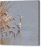 Blue Heron In The Wild Canvas Print