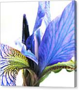Blue Iris 1 Canvas Print
