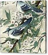 Blue Jays And Blossoms Canvas Print