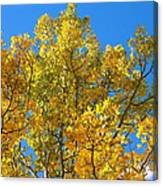 Blue Skies And Golden Aspen Trees Canvas Print