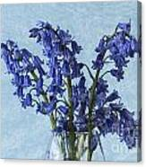 Bluebells 1 Canvas Print