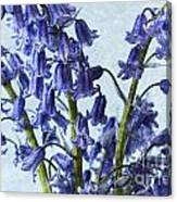 Bluebells 2 Canvas Print