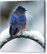 Bluebird In Snowstorm Canvas Print