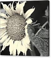 Blumen Canvas Print