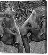 Blushing Elephants Canvas Print