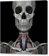 Bones Of The Head Canvas Print