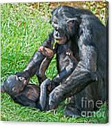 Bonobo Adult And Baby Canvas Print