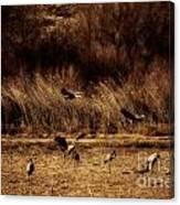 Bosque Del Apache New Mexico-sand Cranes V2 Canvas Print
