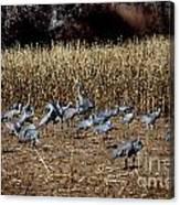 Bosque Del Apache New Mexico-sand Cranes V3 Canvas Print