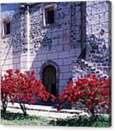 Bougainvillea And Stone Wall Canvas Print