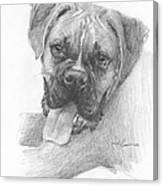 Boxer Dog Pencil Portrait Canvas Print