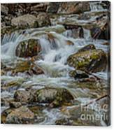 Bridalveil Creek Yosemite Canvas Print