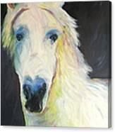 Bright Eyed Bailey Canvas Print