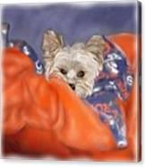 Bronco Maggie Canvas Print