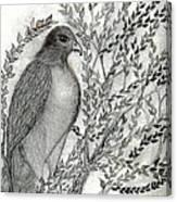 Brother Hawk Canvas Print
