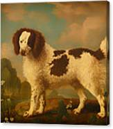 Brown And White Norfolk Or Water Spaniel Canvas Print
