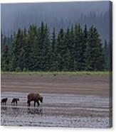 Brown Bear In Lake Clark National Park Canvas Print