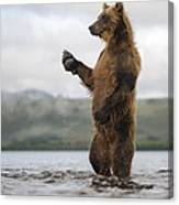 Brown Bear In River Kamchatka Russia Canvas Print