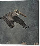 Brown Pelican 2 Canvas Print