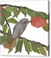 Bulbul And Persimmon  Canvas Print