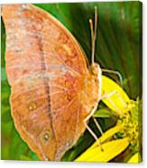 Butterfly Mimicry Canvas Print