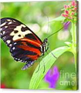 Butterfly On Bush Canvas Print