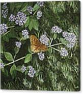 Butterfly On Oregano Canvas Print