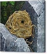 Campagnol Nest Canvas Print