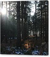 Cannock Chase Canvas Print
