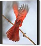 Cardinal Launch Canvas Print