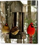 Cardinals And Carolina Wren Canvas Print
