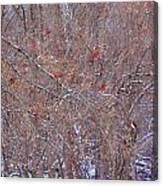 Cardinals Galore Canvas Print
