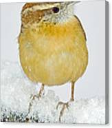 Carolina Wren In Winter Canvas Print