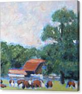 Carrboro Cattle Canvas Print